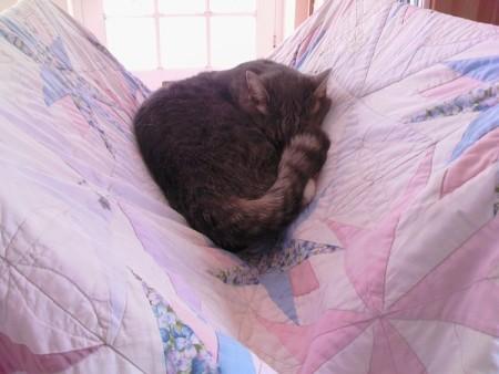 Photo of Christian romance author Autumn Macarthur's naughty tabby cat
