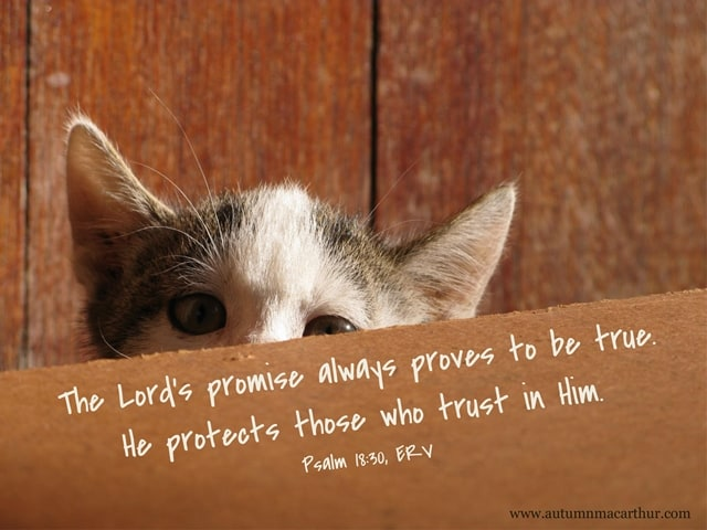 Image of hiding kitten with Bible verse Psalm 18:30, from inspirational romance author Autumn Macarthur