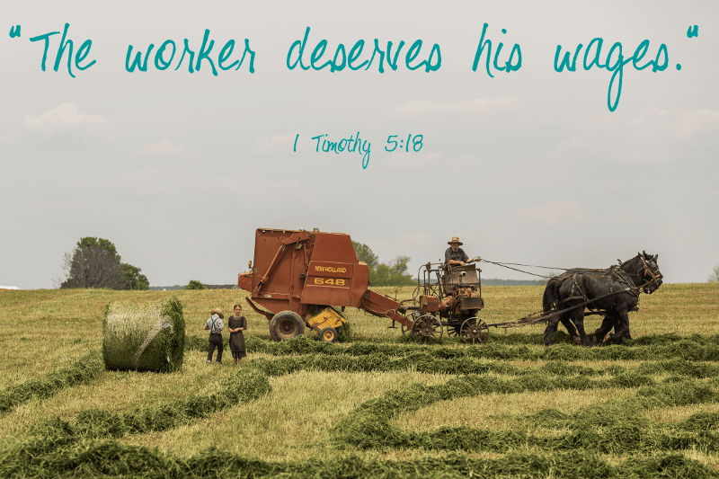 Image of Amish farmers haymaking, with Bible verse 1 Tim 5:18, from inspirational romance author Autumn Macarthur